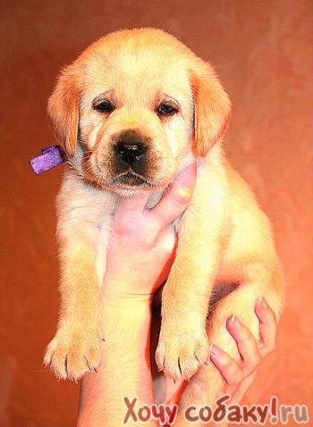 Ласковый,добрый ,игривый пес ищет новый дом и заботливых хозяев!!!самец,8 месяцевзовут арчи требуется дрессировка
