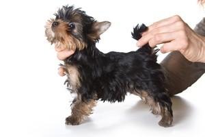 Вязание для собак одежды и обуви с описанием