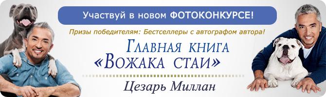 http://hochusobaku.ru/img/konkurs_13.jpg